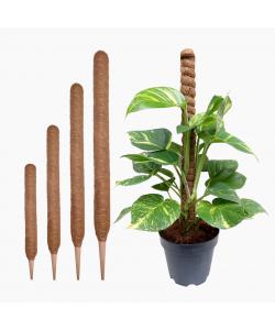 Coco Stick - Plant Support Pole