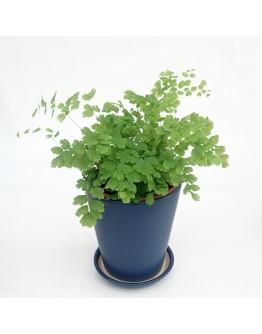 Minimalist Blue Ceramic Pot