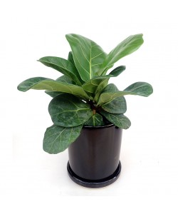 Modern Black Ceramic Pot