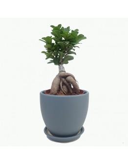 Moonshine Grey Ceramic Pot