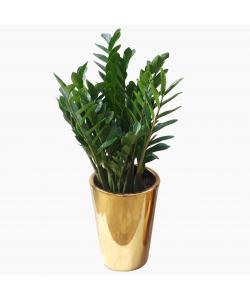 Luxe Ceramic Pot (Gold)