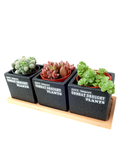 Modern Cement Planter Set for Succulents and Cactus