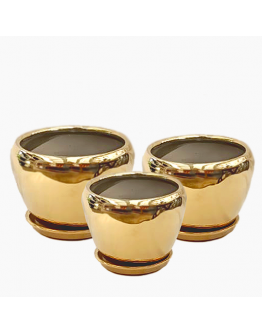 Luxe Ceramic Pot (Gold bowl)