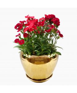 Luxe Ceramic Pot (Gold bowl)