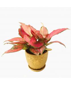 Lucky Gold 福 'Fu' Design Ceramic Pot