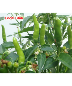 Chili 辣椒