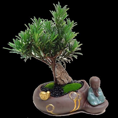 Podocarpus Bonsai with Meditation Buddha 罗汉松