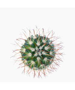 Cactus Ball - Green P55mm