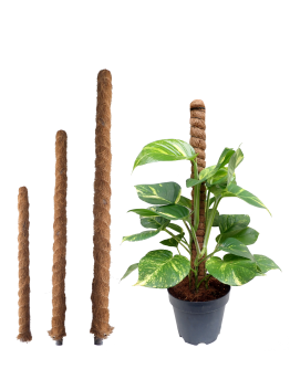 Coco Stick - Plant Support Pole