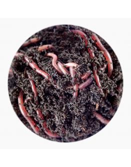 Earthworms 50g