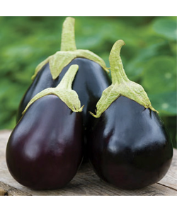 Eggplant By The Seeds Master