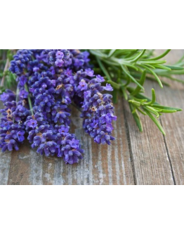 English Lavender Seeds by The Seeds Master (360-400 seeds)
