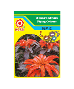 Amaranthus Flying Colours 雁来红 Seeds By HORTI