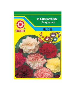 Carnation 康乃馨 Seeds By HORTI