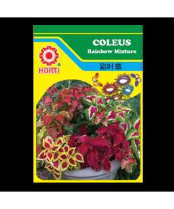 Coleus Rainbow Mix 彩叶草 Seeds By HORTI