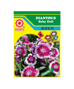 Dianthus Baby Doll Seeds 西洋石竹 By HORTI