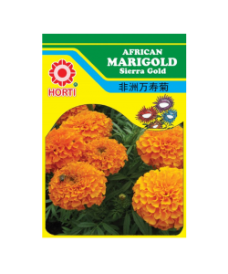 Marigold 万寿菊 Seeds By HORTI