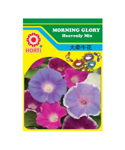 Morning Glory 牵牛花 Seeds By HORTI