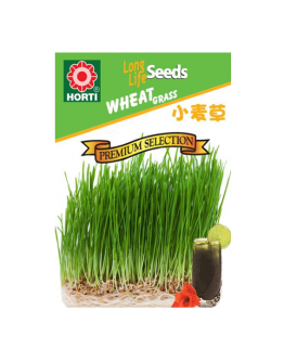 Wheatgrass 小麦草 Seeds By HORTI
