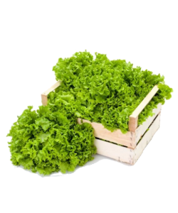 Lettuce 'Grand Rapids' Seeds by The Seeds Master (140-240 seeds)