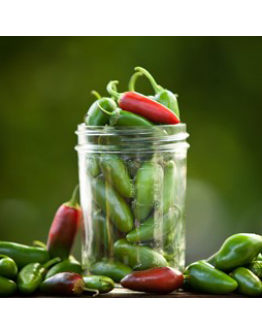 Pepper Hot 'Jalapeno M' Seeds by The Seeds Master (12-16 seeds)