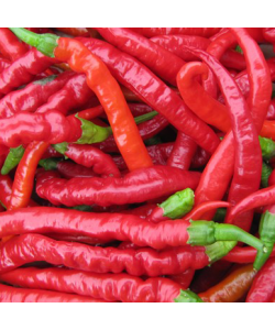 Pepper Hot 'Poseidon' Seeds by The Seeds Master (12-16 seeds)