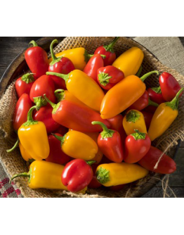 Sweet Pepper 'Lunch Box Mix' Seeds by The Seeds Master (12 seeds)