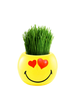 Smileys Ryegrass