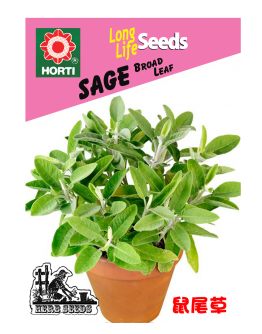 Sage 鼠尾草 Seeds By HORTI